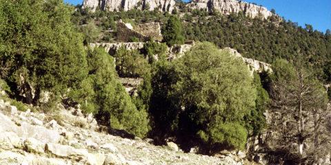 Torre de la Olmedilla